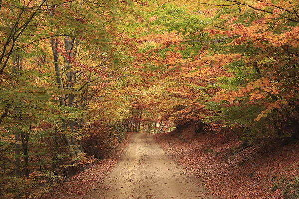 The Colors Of Autumn Rila Mountains Bulgaria Poster