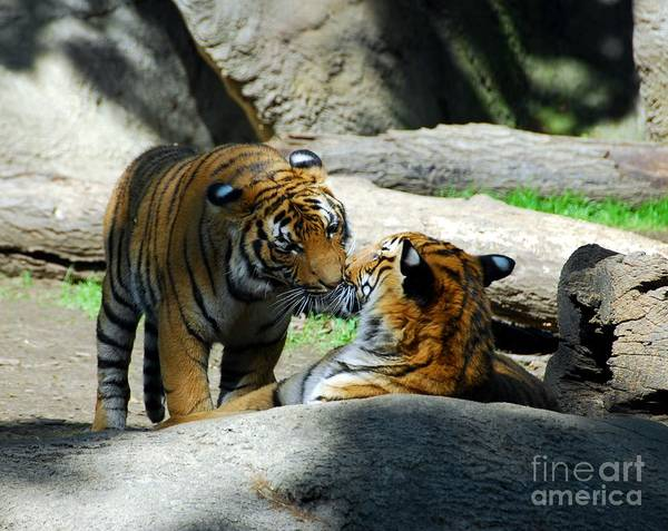 Tiger Love 2 Poster