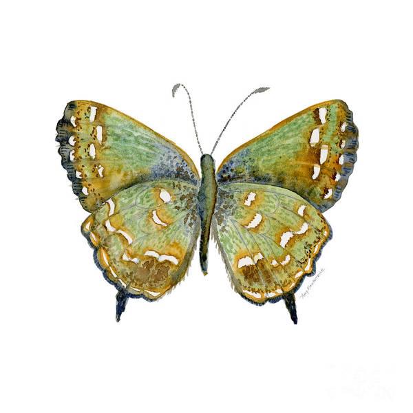 38 Hesseli Butterfly Poster