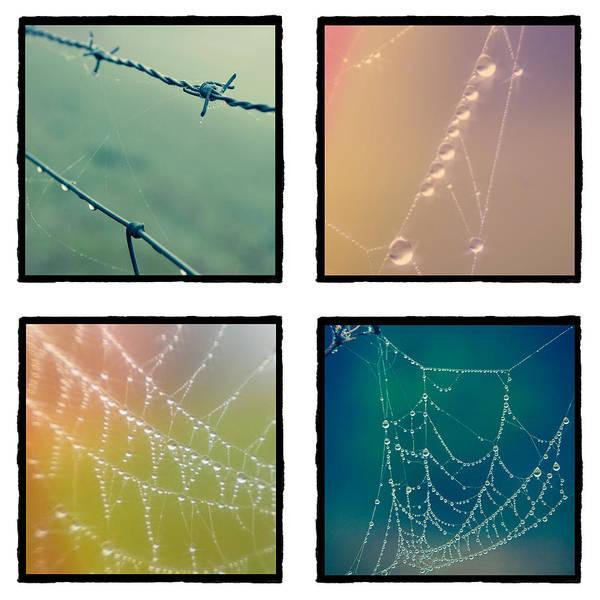 4 Color Web Droplets Poster