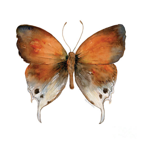 47 Mantoides Gama Butterfly Poster