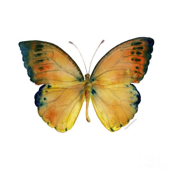 53 Leucippe Detanii Butterfly Poster