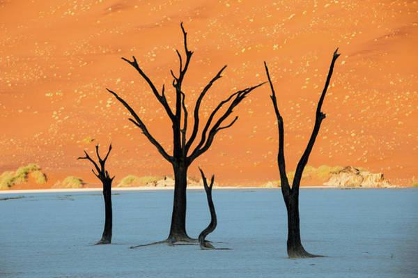 Dead Trees In A Desert, Dead Vlei Poster