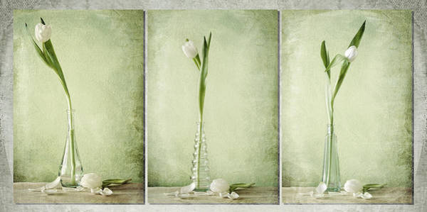Waiting For Spring  Poster