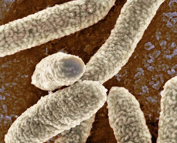E Coli Bacteria Poster