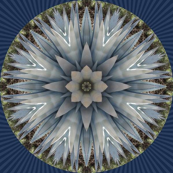 A Blue Agave Poster