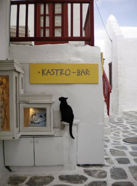 A Curious Cat In Mykonos Poster