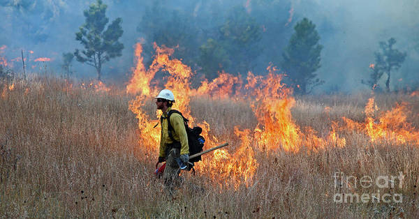 A Firefighter Ignites The Norbeck Prescribed Fire. Poster