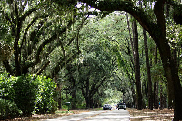 A Pretty Tree Covered Road Somewhere On Hilton Head Island Poster
