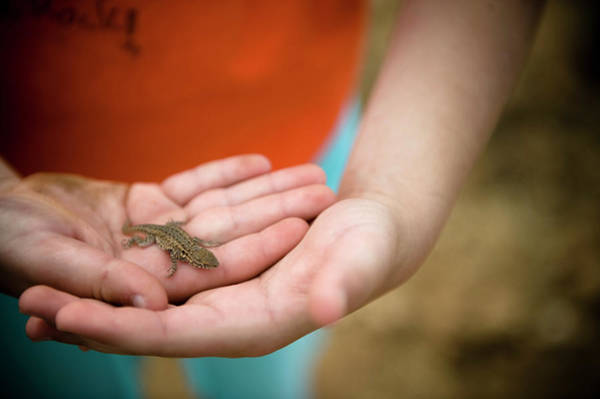 A Young Girl Holds A Small Lizard Poster