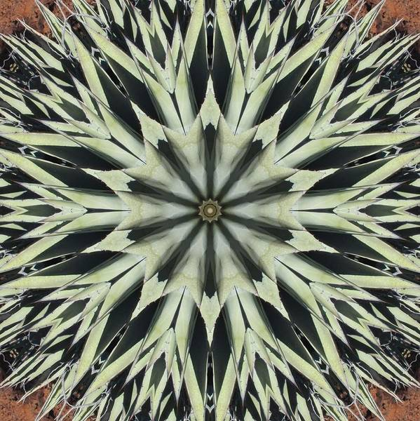 Agave Star Poster