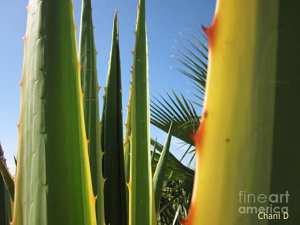 Agaves And Palm Trees Poster