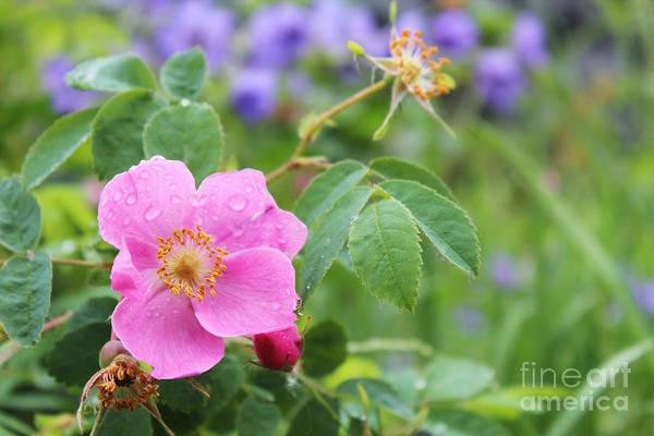 Alaska Wildflowers Poster