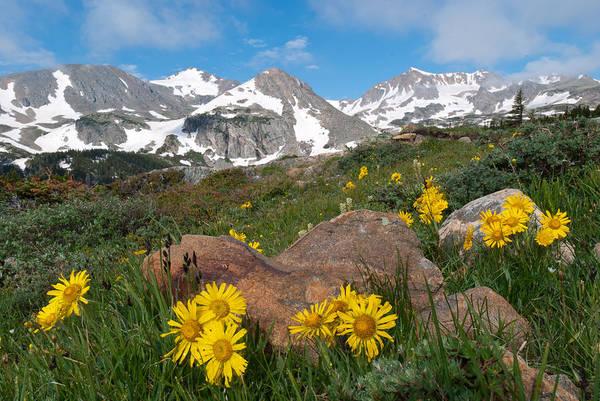 Alpine Sunflower Mountain Landscape Poster