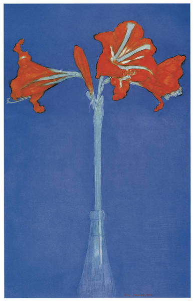 Amaryllis In A Flask In Front Of A Blue Background Poster