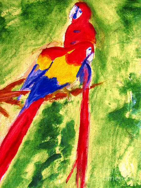 Amazon Jungle Birds Poster