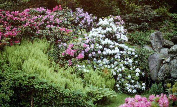 An Olmstead Garden Poster