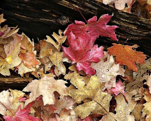 Arizona Fall Colors Poster