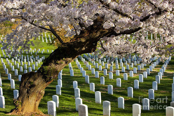 Poster featuring the photograph Arlington National Cemetary by Brian Jannsen