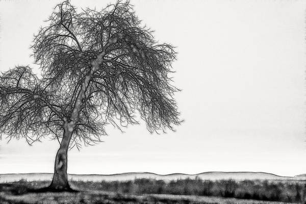 Artistic Black And White Sunset Tree Poster