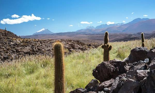 Atacama Landscape With Cactus Poster