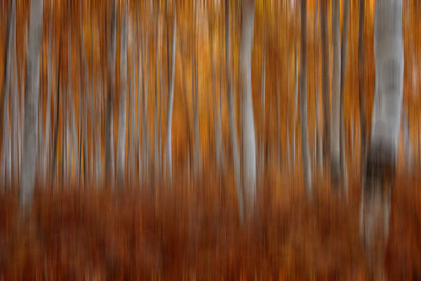 Poster featuring the photograph Autumn Blur by Darlene Bushue