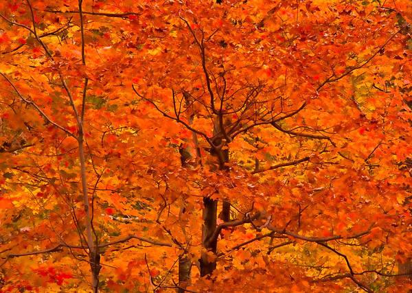 Autumn Color Splash Poster