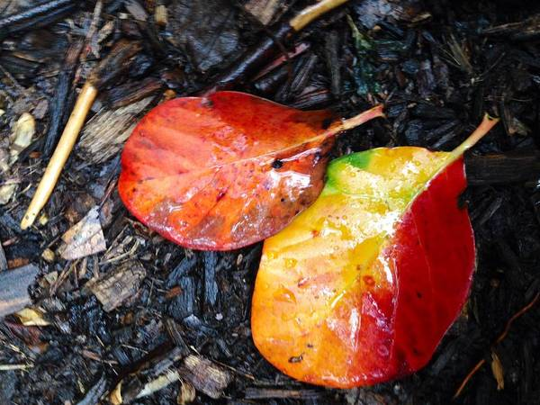 Autumn Colors Poster