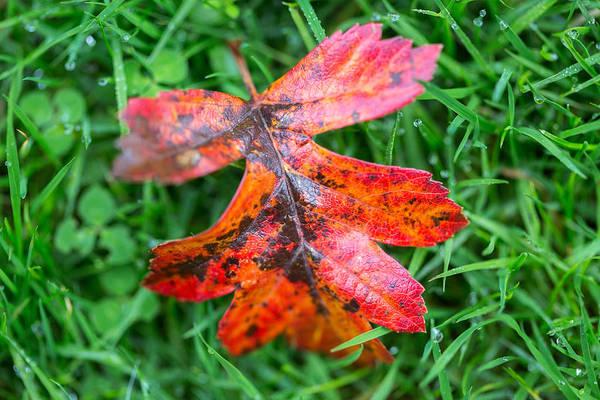 Autumn Colours. Poster