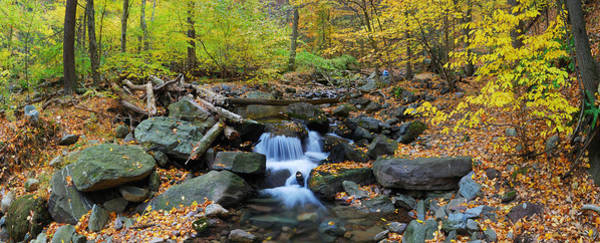 Autumn Creek Panorama With Yellow Maple Trees Poster