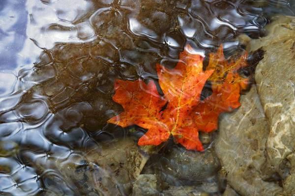 Autumn Down Under Poster