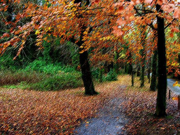 Autumn Entrance To Muckross House Killarney Poster