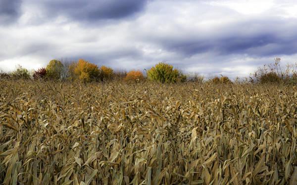 Autumn Field Poster