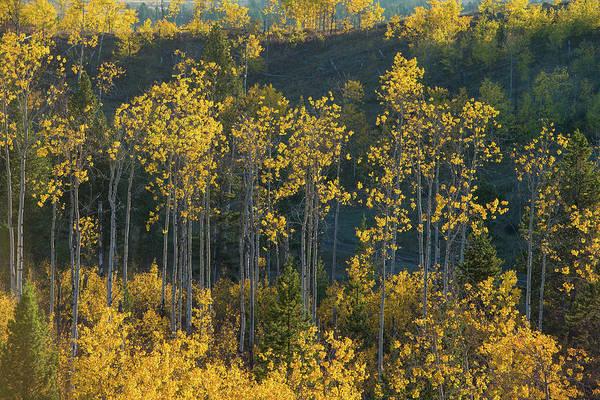 Autumn Foliage In Bridger Teton Poster