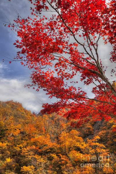 Poster featuring the photograph Autumn In Japan by Tad Kanazaki