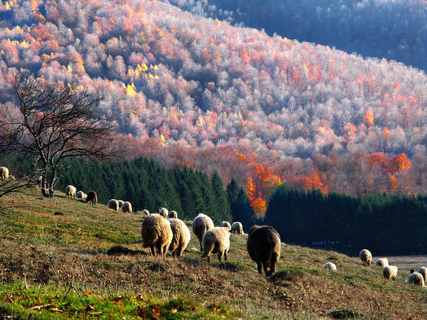 Autumn In Romanian Mountains Poster