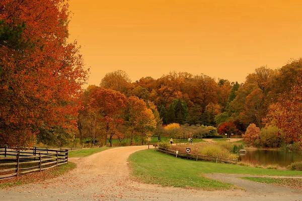 Autumn In The Park - Holmdel Park Poster