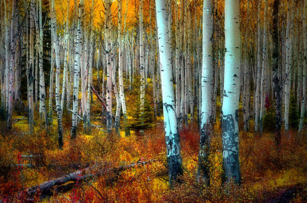 Autumn In The Woods Poster
