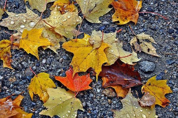 Autumn Leaves In Rain Poster