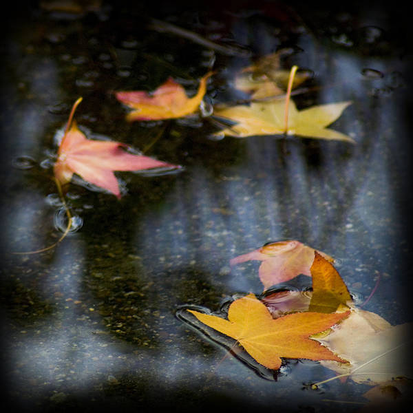 Autumn Leaves On Water Poster