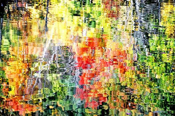 Autumn Leaves Reflected In Pond Surface Poster
