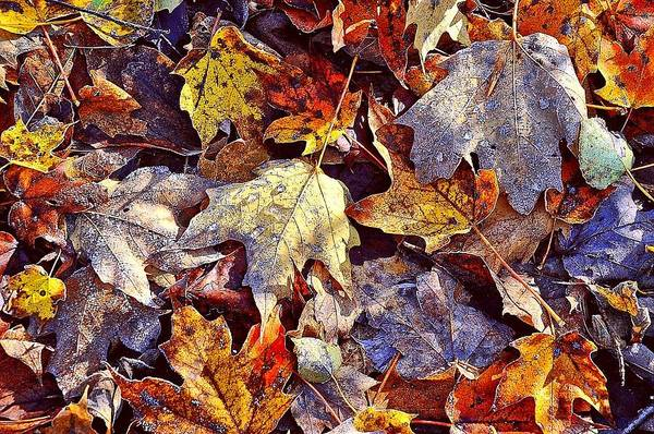 Autumn Leaves With Frost Poster