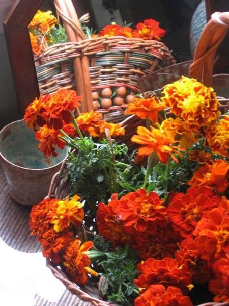 Autumn Marigolds Poster