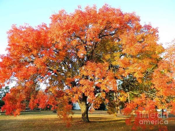 Autumn Orange Poster