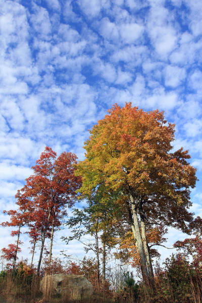 Autumn Perfection Poster
