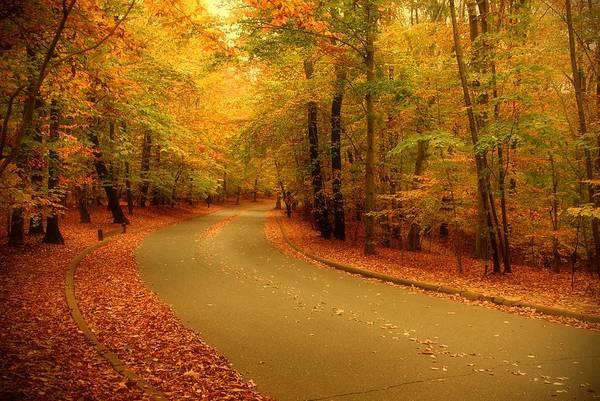 Autumn Serenity - Holmdel Park  Poster