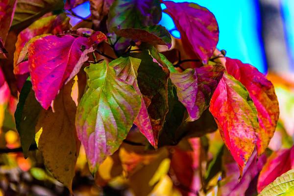 Autumns Wake Up Call Poster