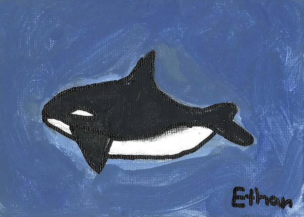 Poster featuring the painting Baby Orca by Fred Hanna