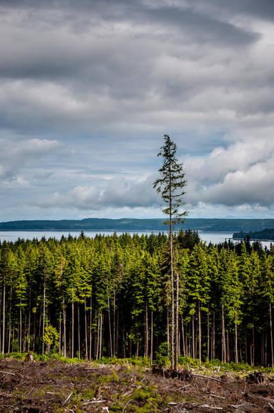 Logging Road Ocean View  Poster
