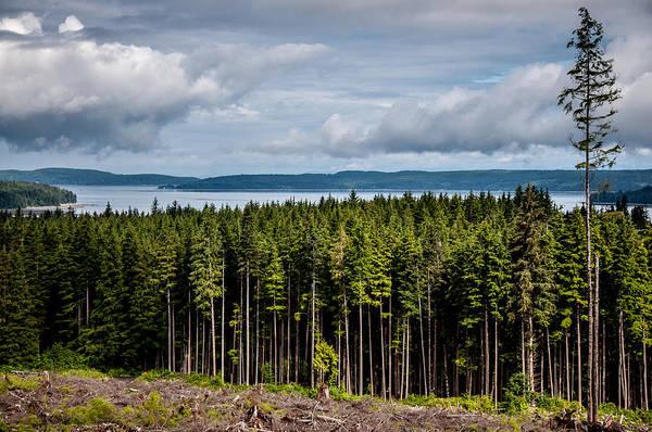 Logging Road Landscape Poster